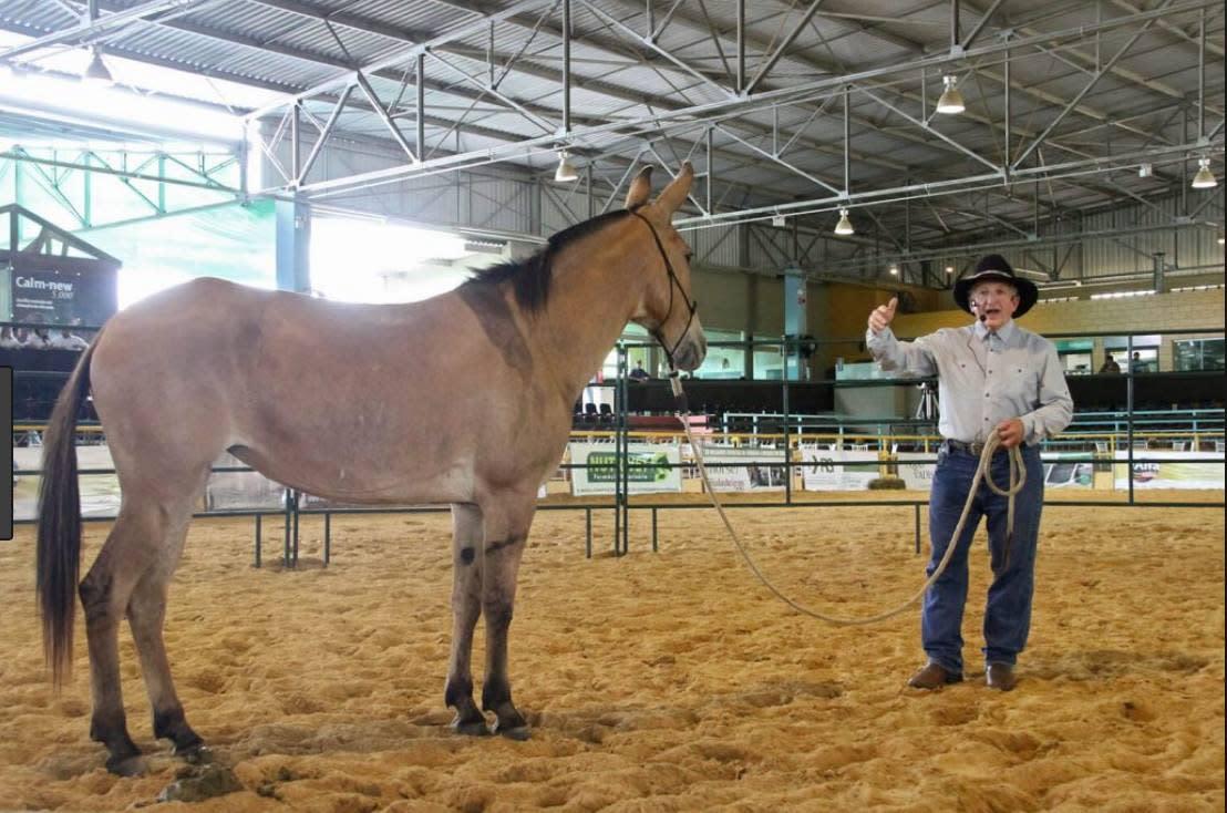 Steve Edwards, mule and donkey trainer, Hoosier Horse Fair