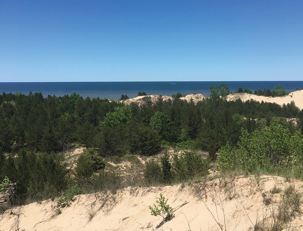 Haley Collins Succession Trail view of dunes