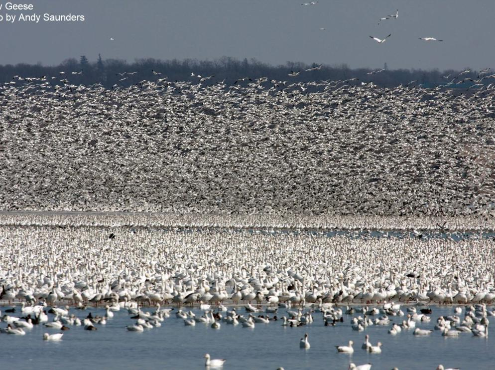 Waterfowl Migration at Montezuma