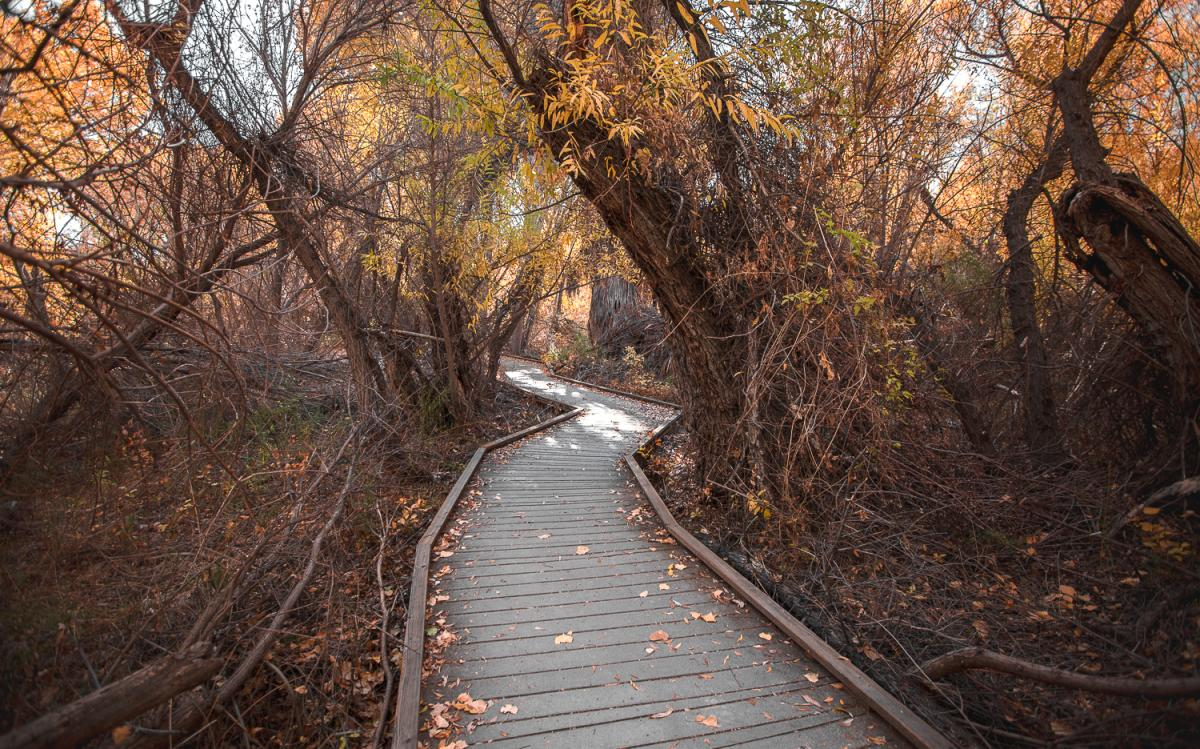 Boardwalk path with trees on the Marsh Trail in Big Morongo Canyon Preserve