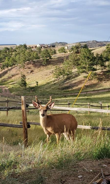 Deer Photo Curt Gowdy