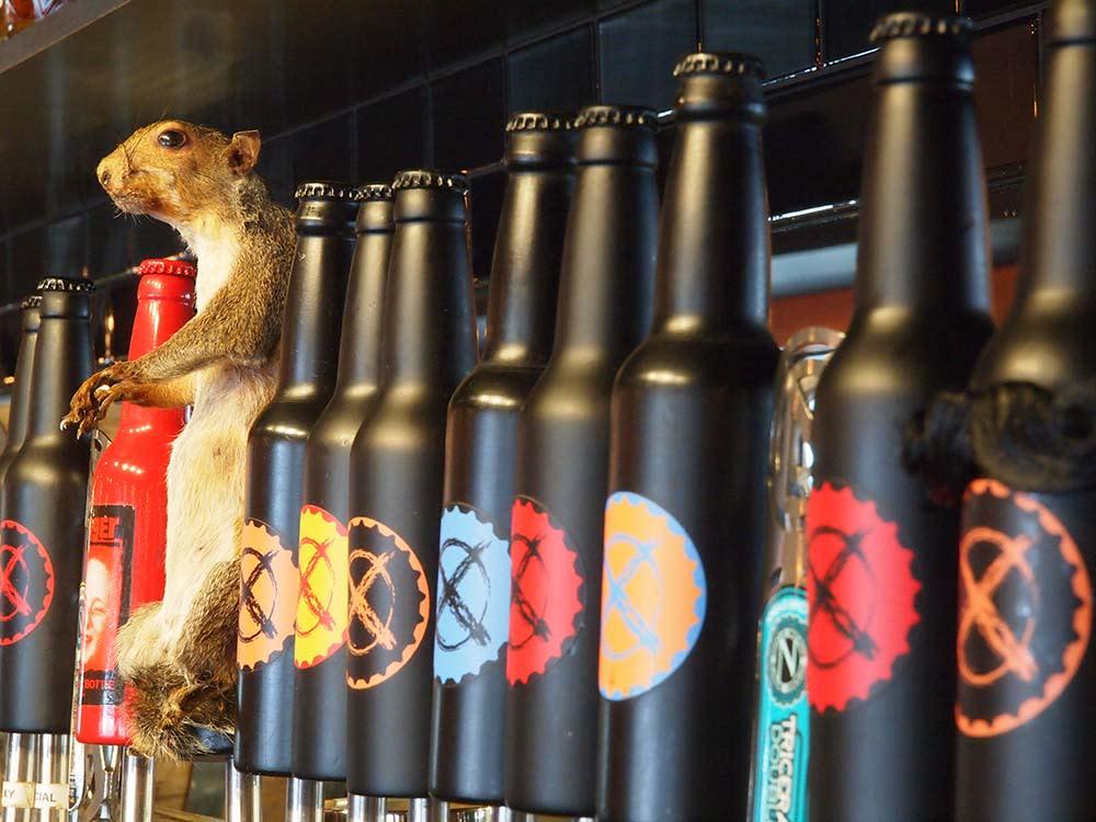 Black-Bottle-Taps-&-squirrel-tap,-Credit-Tim-O'Hara