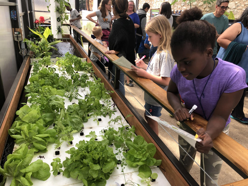 children in the Aquaponics Greenhouse the Science Mill museum in johnson city texas