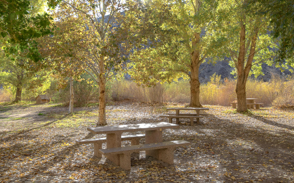 Picnic tables under the trees at the Whitewater Preserve Campground
