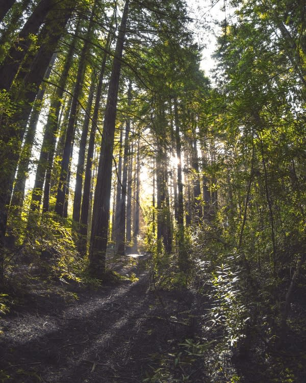 Sunshine through the trees at Joaquin Miller Park in Oakland