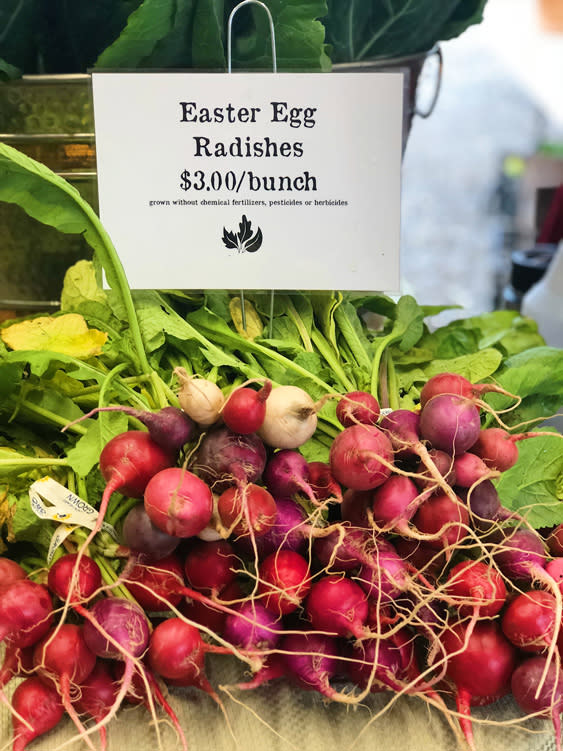 Farmers Markets - Fairbanks Alaska - Easter Egg Radishes