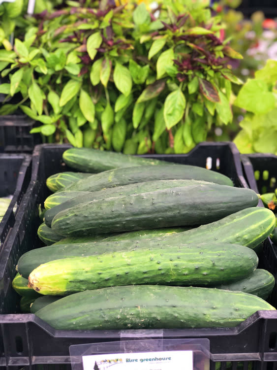 Farmers Markets - Fairbanks Alaska - cucumber