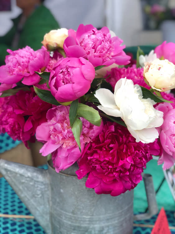 Farmers Markets - Fairbanks Alaska - bunch of peonies