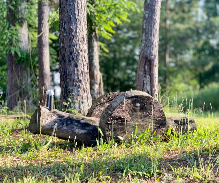 Hays Nature Preserve Snail
