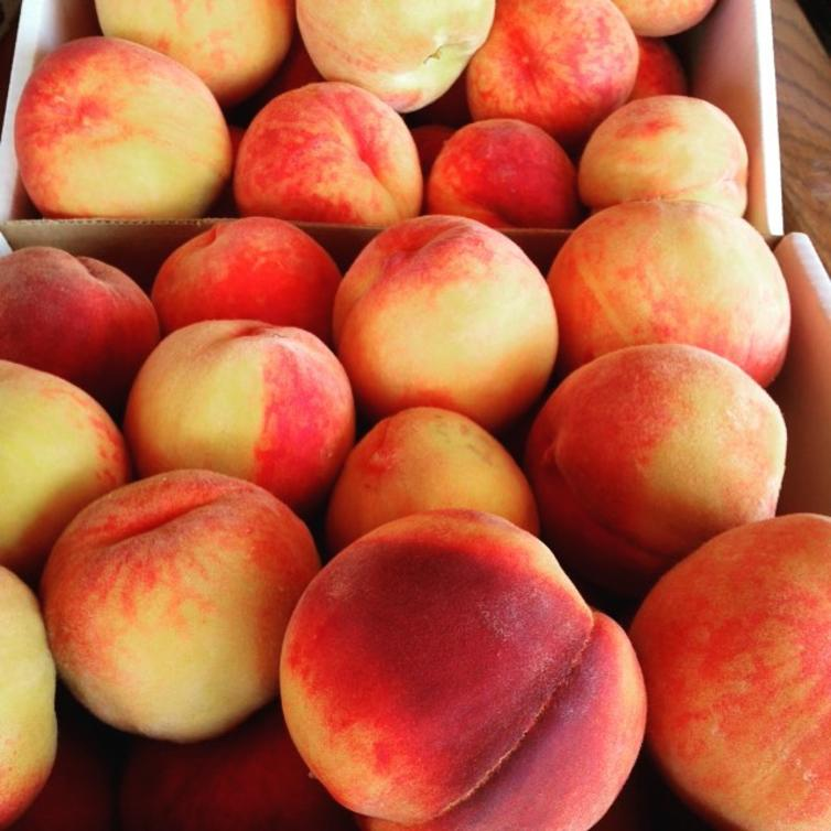 Okanagan Peaches