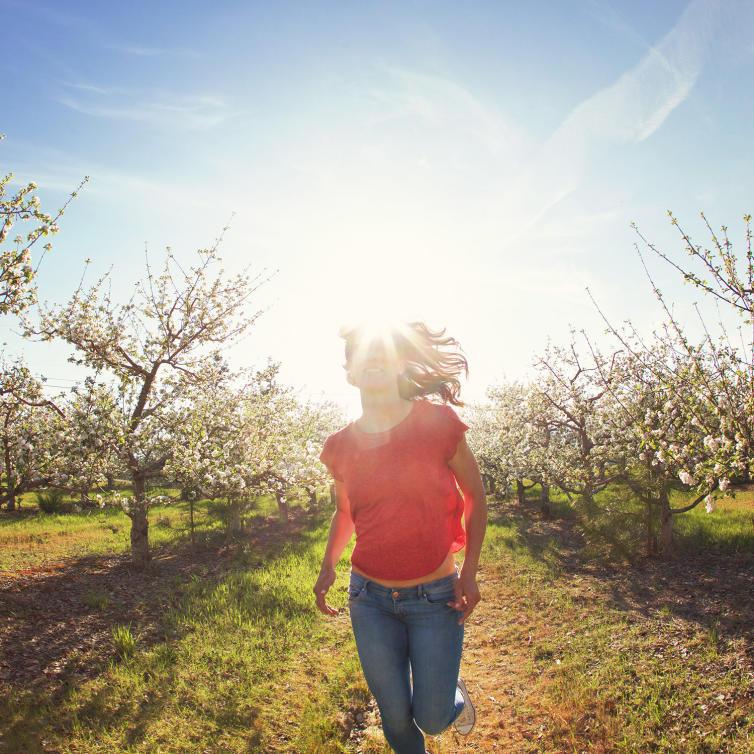 Kelowna Orchard