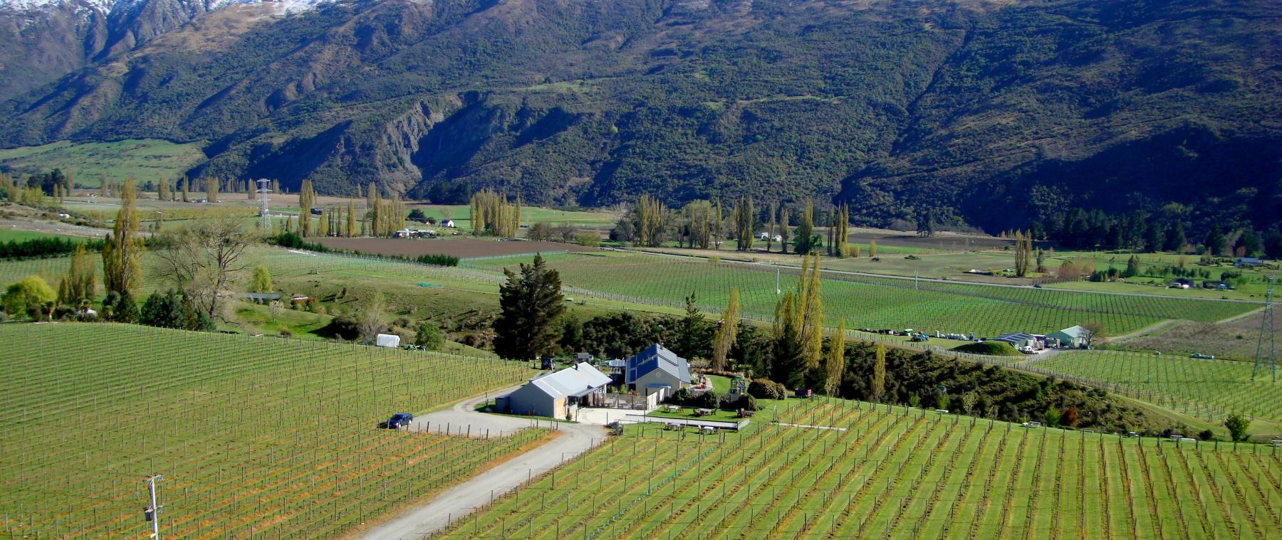 Brennan Wines and Otago Viticulture And Oenology