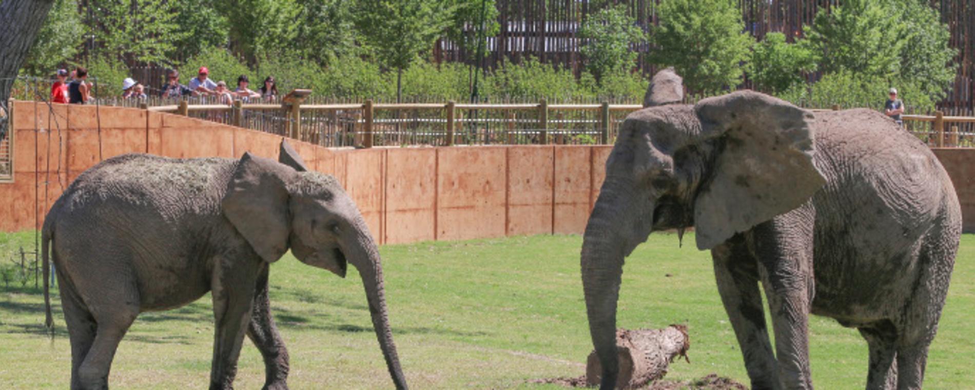 Elephants of the Zambezi River Valley - Arusi & Stephanie