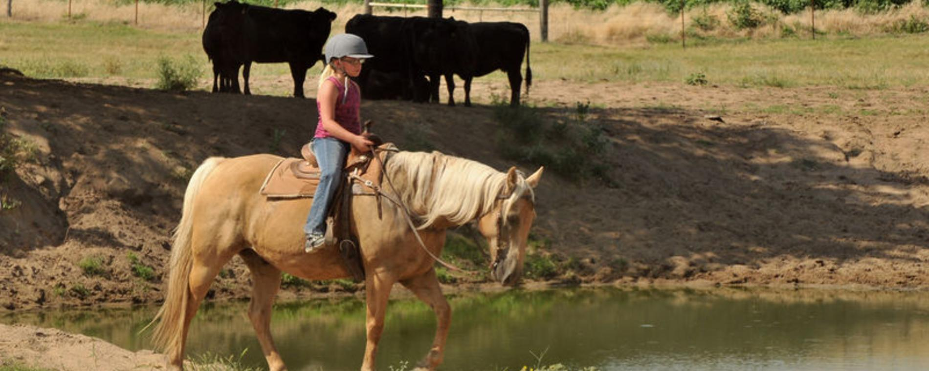 All ages can ride horses at C-Arrow Stables