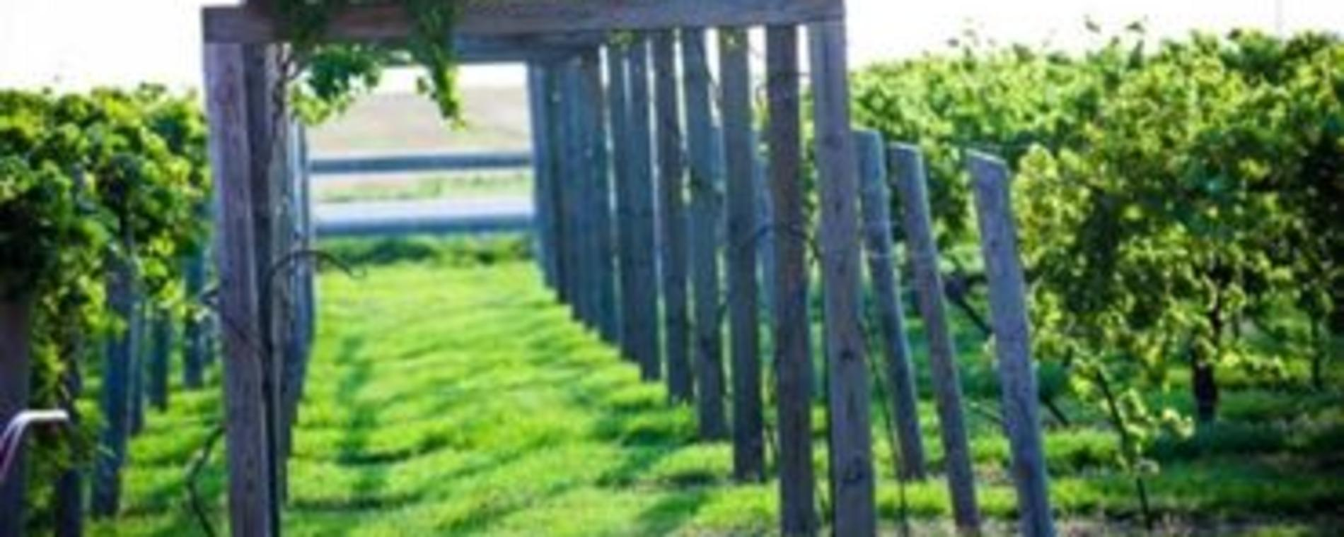 Prairie Hill grape arbor Visit Wichita