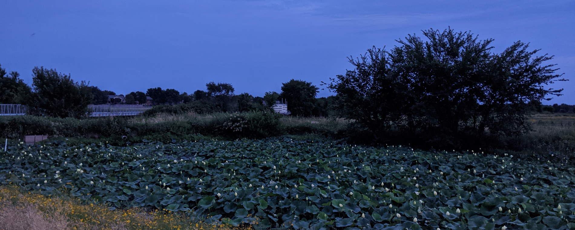 Pracht Wetlands Wichita