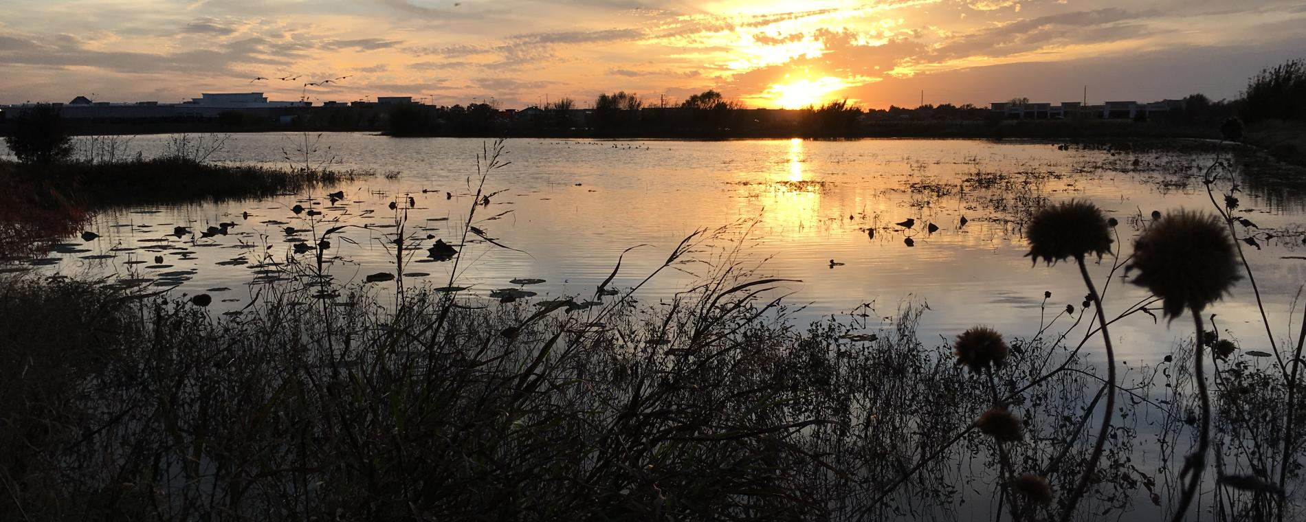 Pracht Wetlands Night