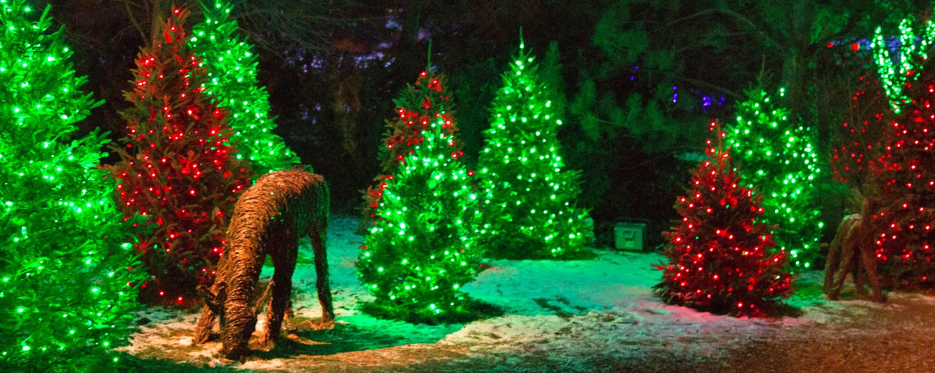 Christmas Lights Utah County 2020 6 Festive Christmas Activities | Explore Utah Valley