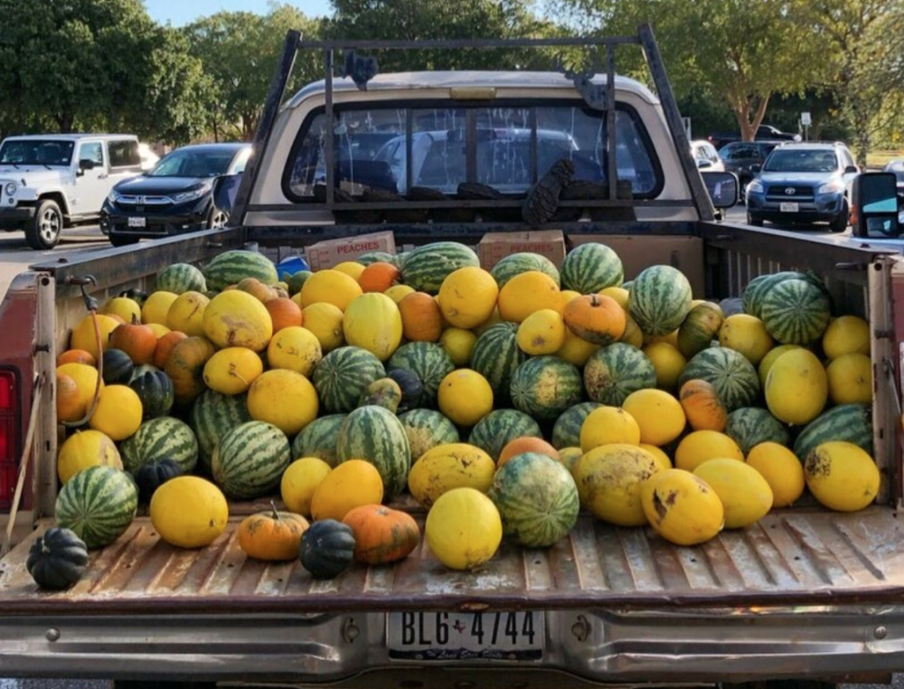 Truck bed full of melons and squash for sale at Texas Farmers Market at Lakeline near Austin Texas