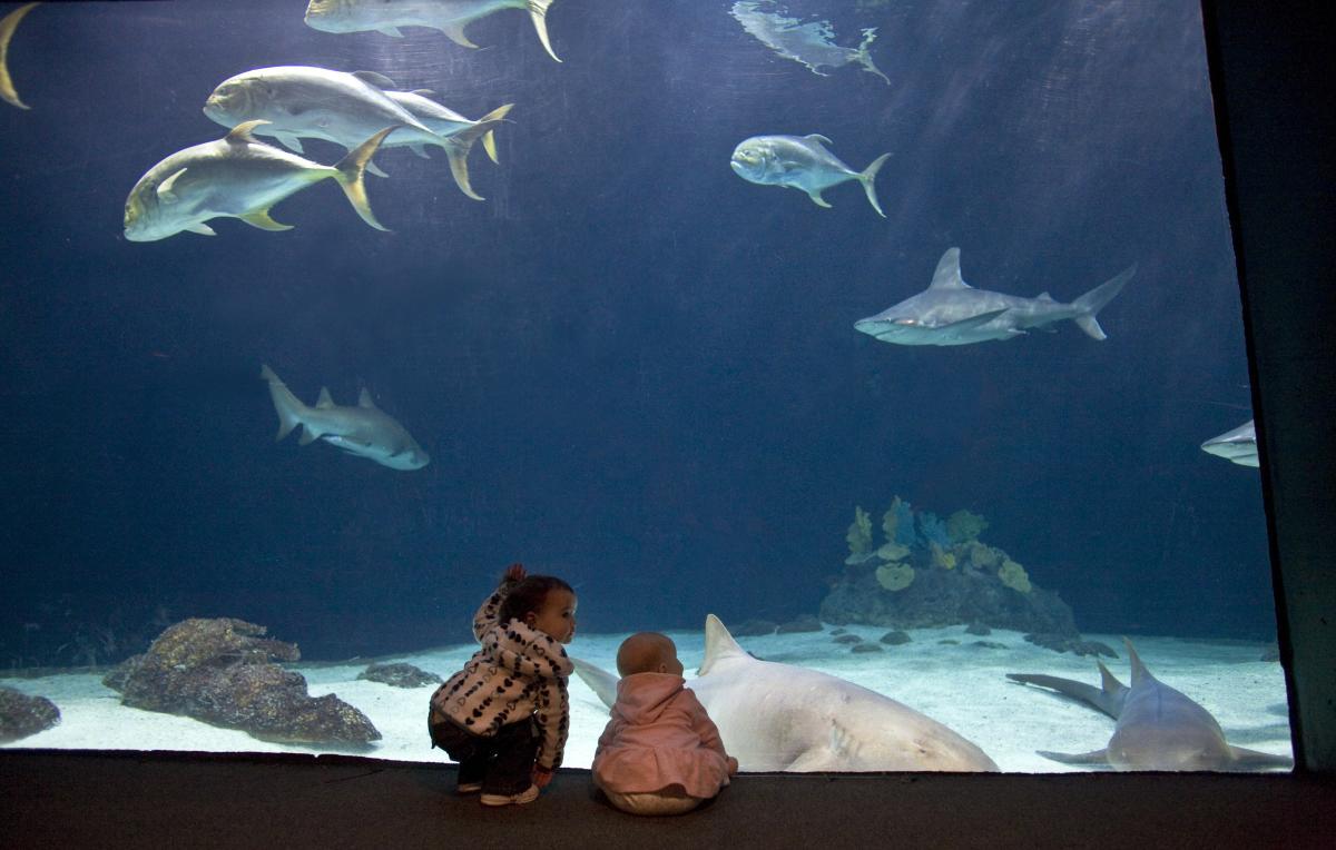 Point Defiance Zoo Meetings