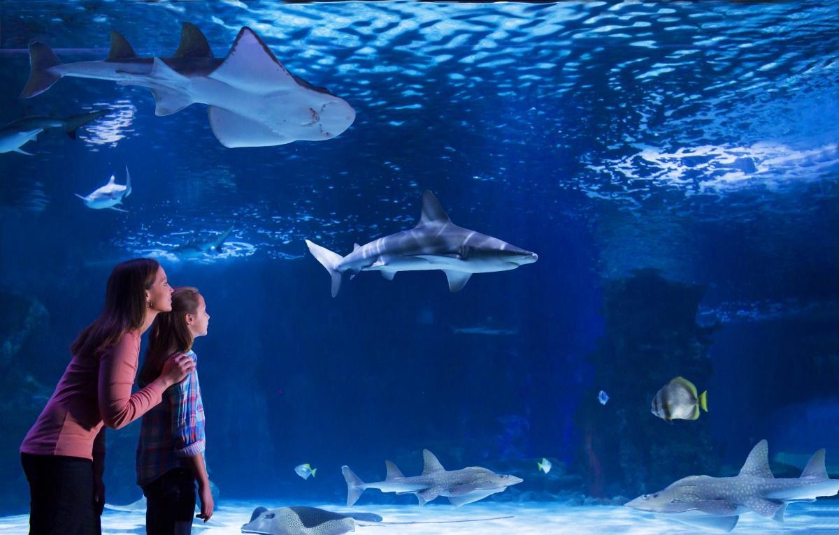 Newport Aquarium Shark Theater