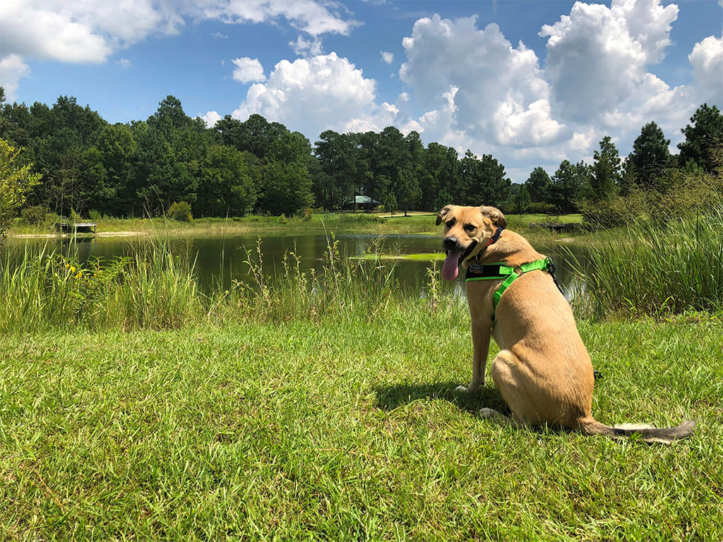 Howell Woods is dog-friendly and a great outing for hiking wiht your pets.