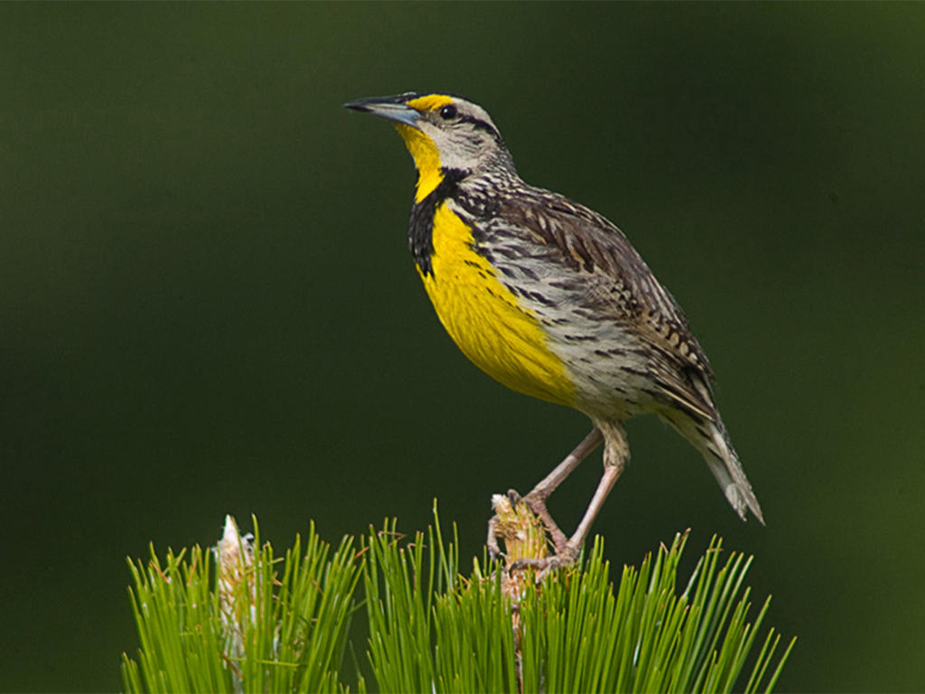 Warbler bird watching at Howell Woods Environmental Learning Center near Four Oaks, NC.