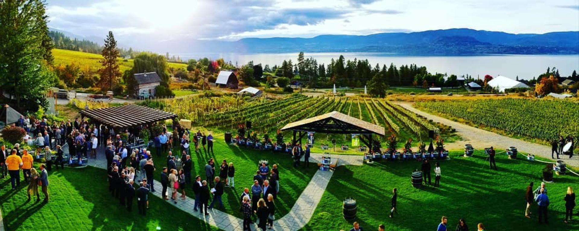 Vineyard Lawn