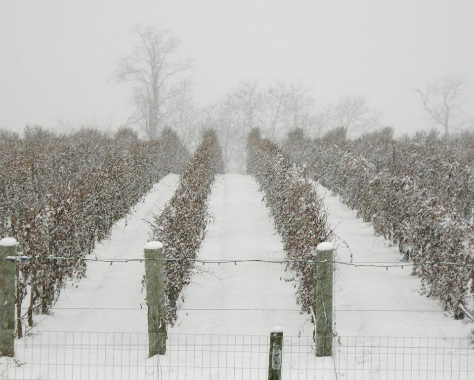 The Little Vineyard