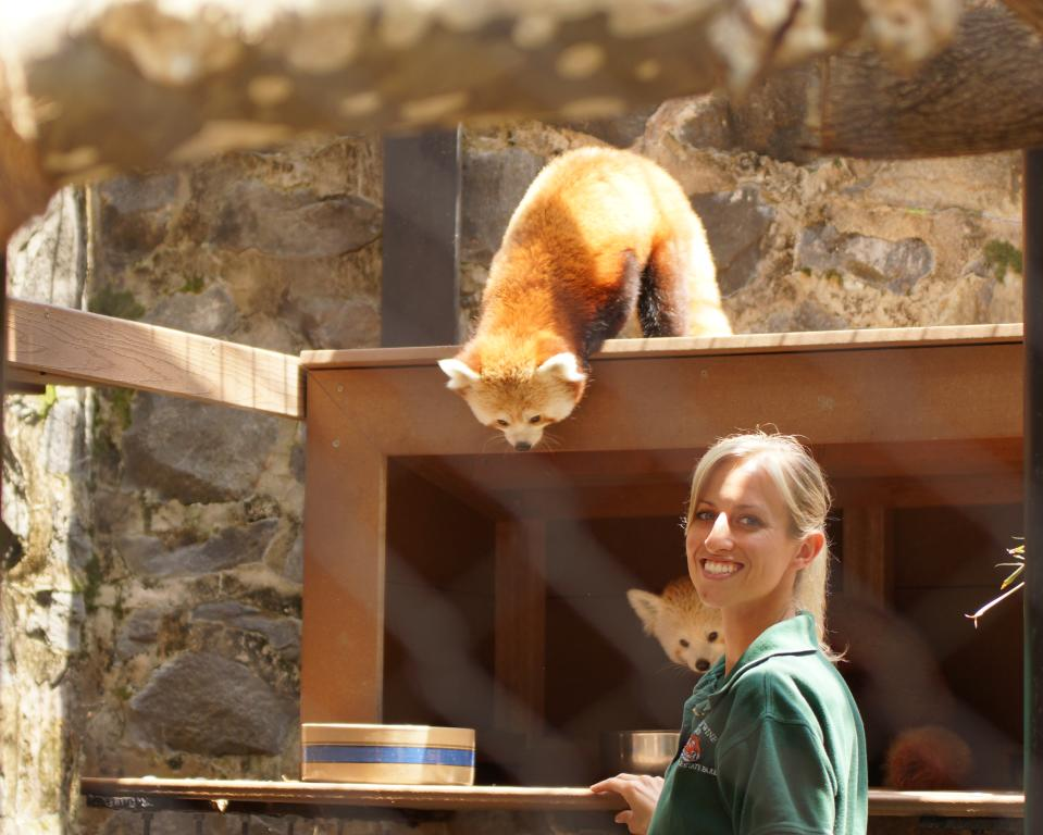 Keeper Talk with Red Panda at Brandywine Zoo