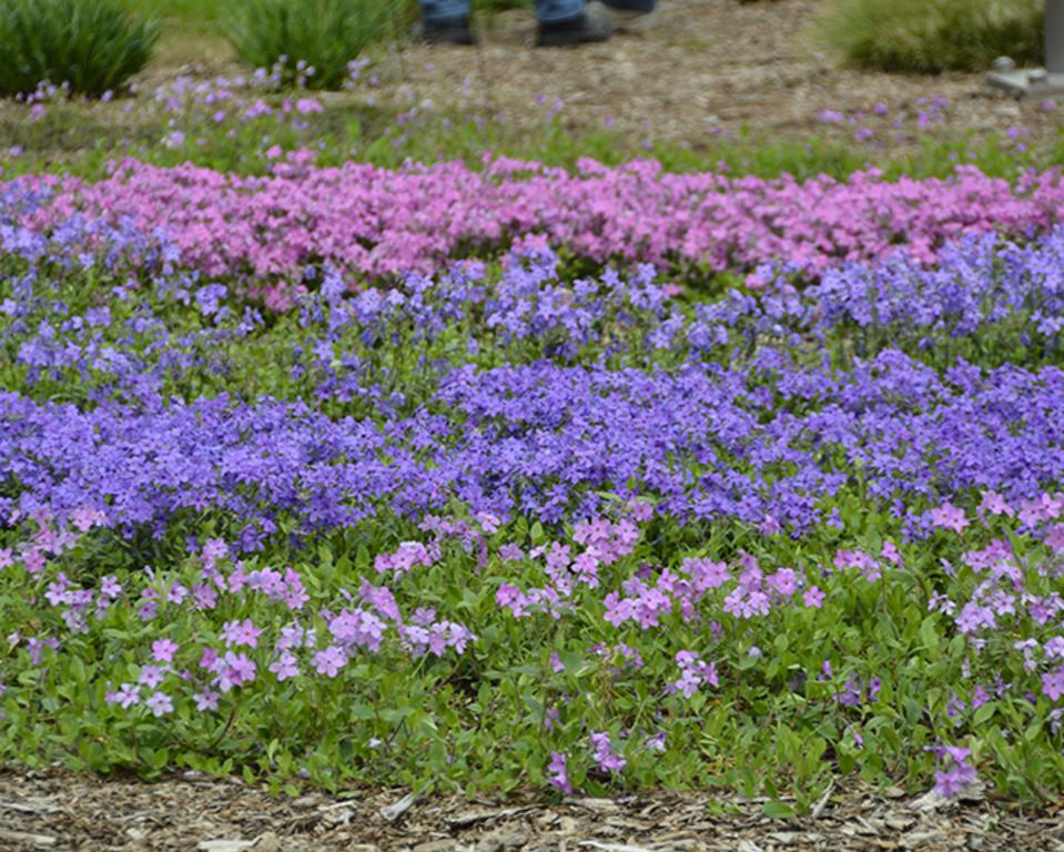 Mt. Cuba's spring wildflowers