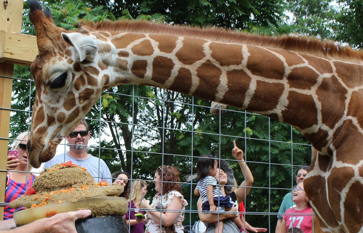The Elwmood Park Zoo celebrates Dhoruba the Giraffe's 8th Birthday with a monthlong celebration beginning August 12