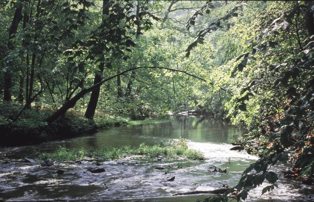 springtime view of Quantico Creek in Prince William Forest Park