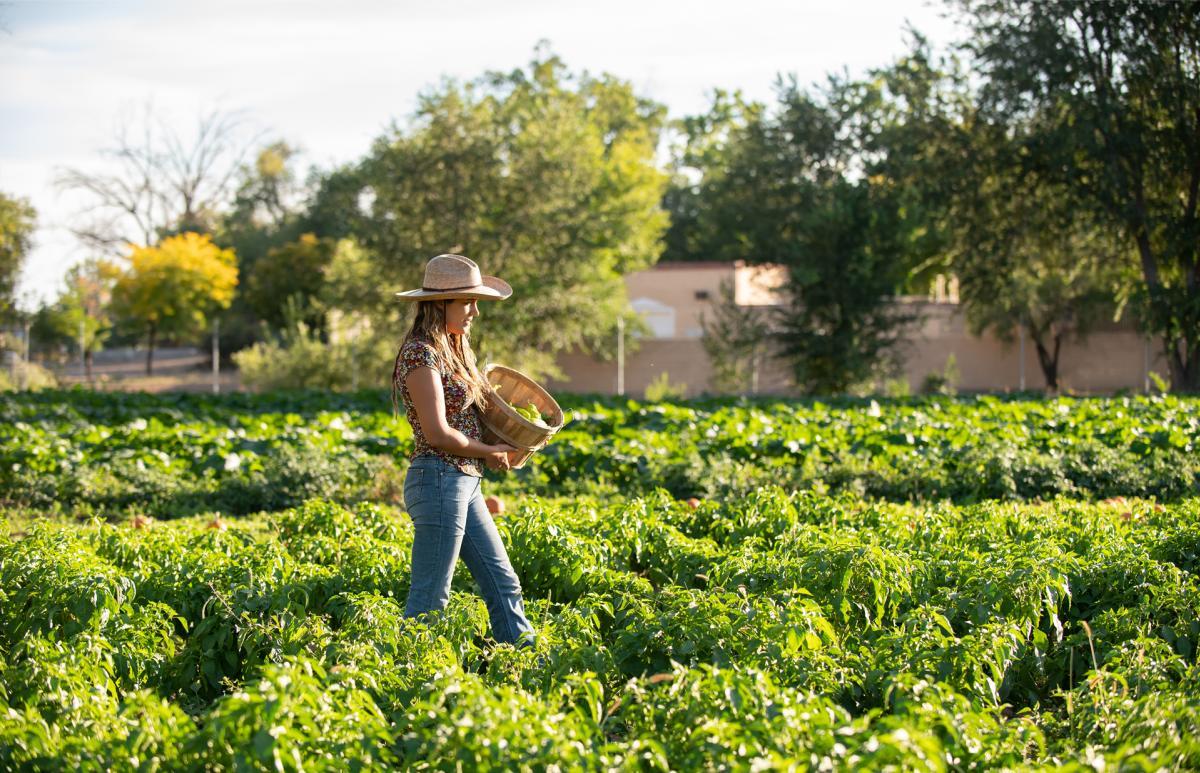 Big Jims at Big Jim Farms, in Los Ranchos de Albuquerque, New Mexico Magazine
