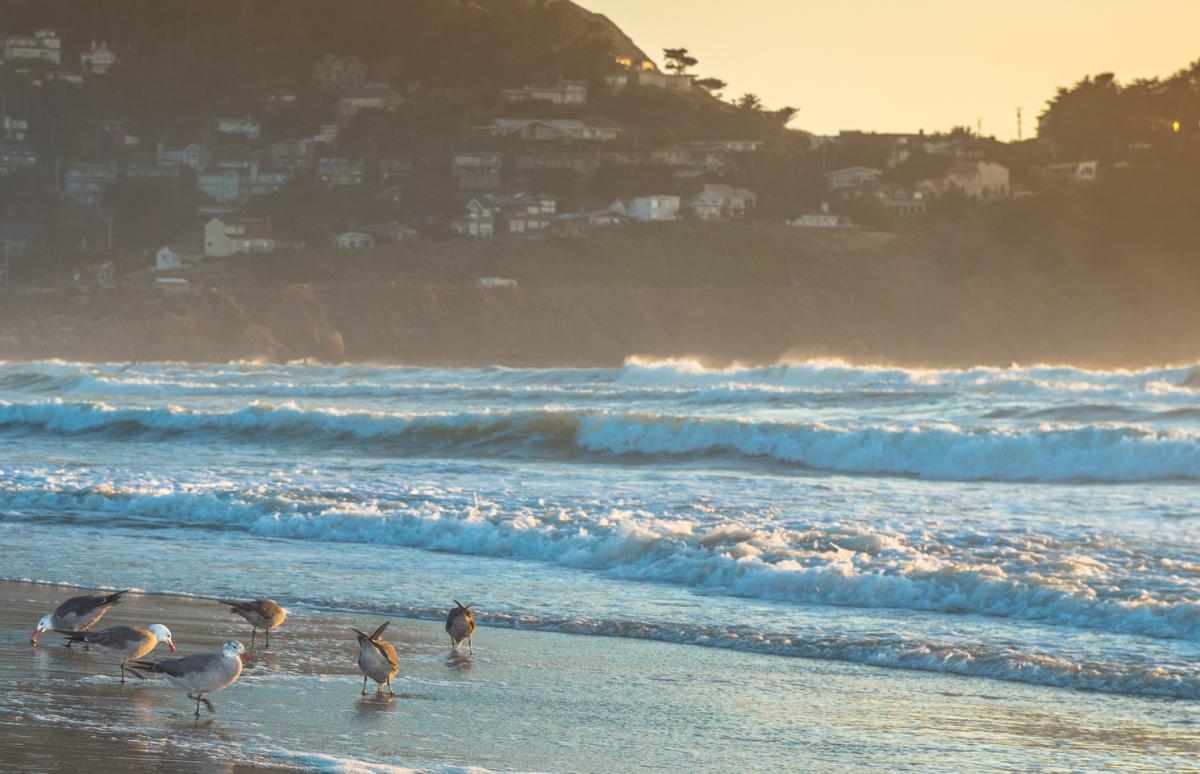 Seagulls at Linda Mar State Beach in Pacifica, California