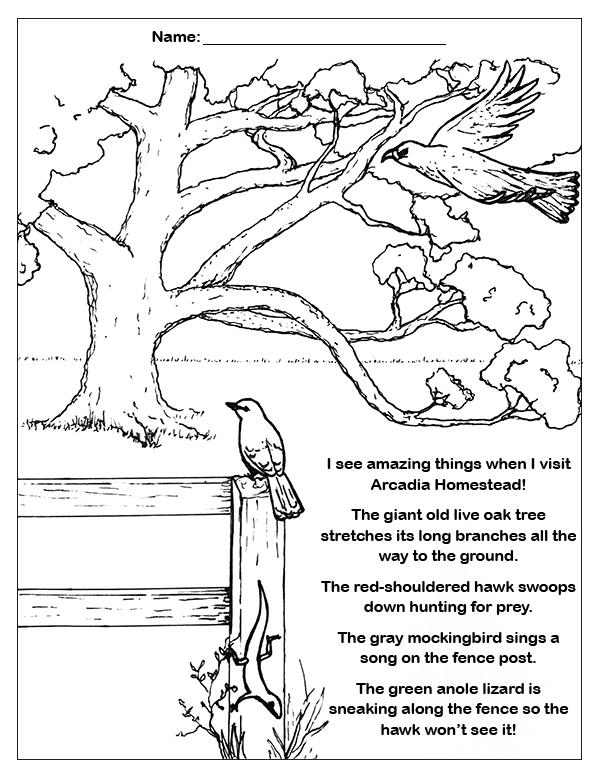 Arcadia Mill Coloring Sheet