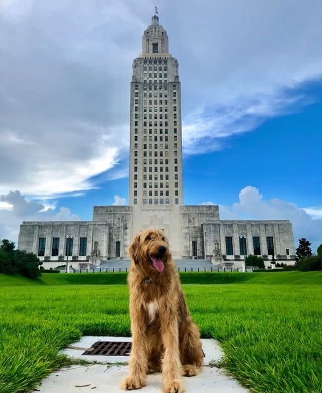 State Capitol Dog-Friendly