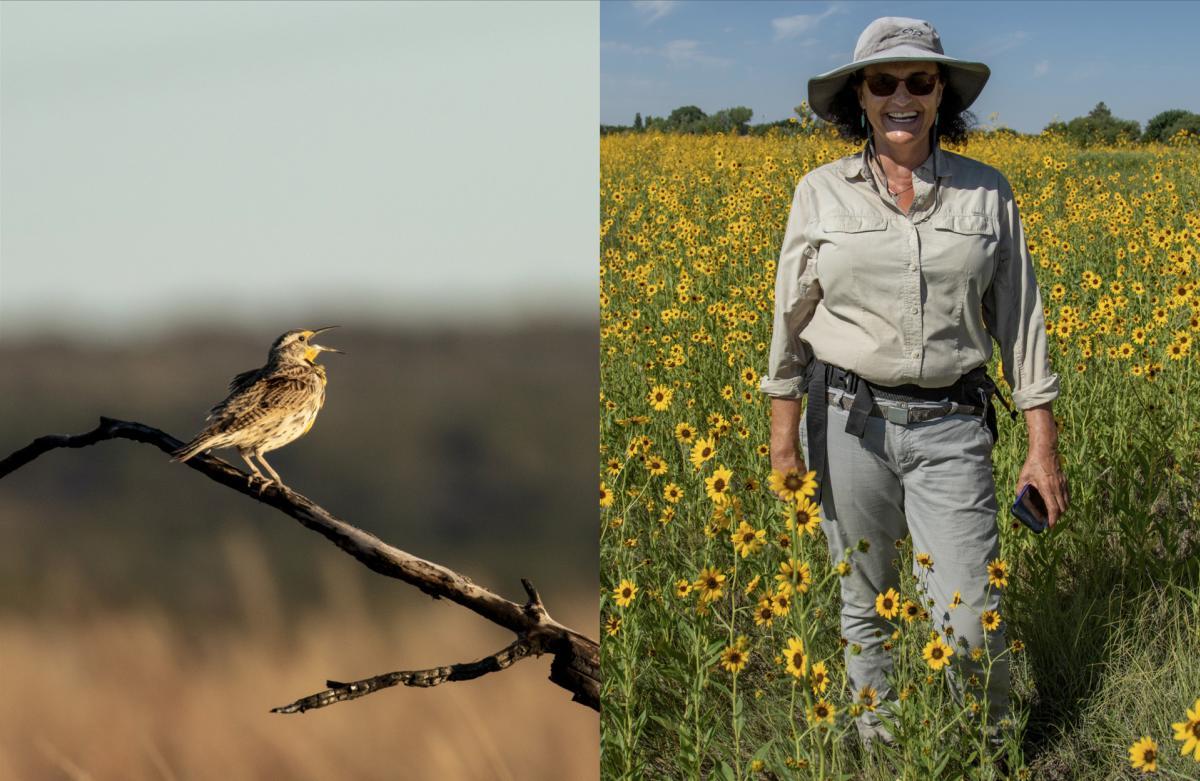 A western meadowlark & state botanist Daniela Roth, New Mexico Magazine