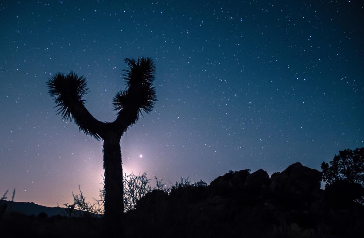 Night sky behind Joshua Tree silhouette in Joshua Tree National Park