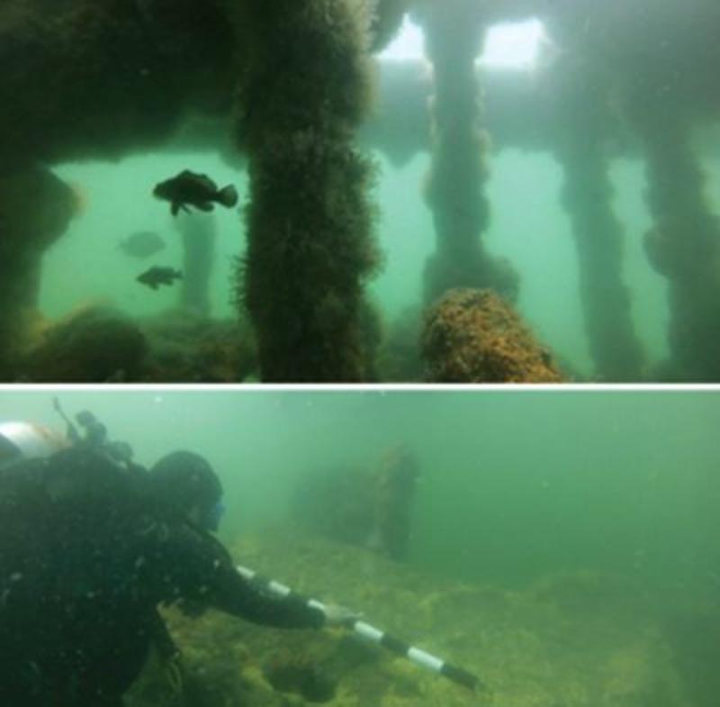 Fish swimming and diver at Kure Beach Dive Site