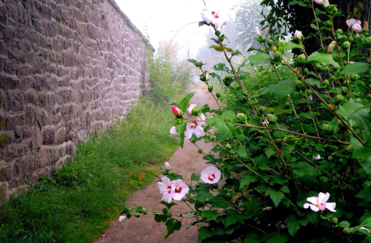 Yardley Canal Towpath Elisa Baxt