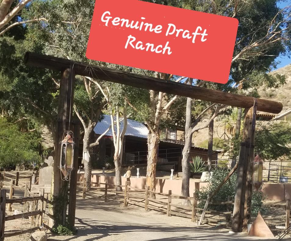 Genuine Draft Ranch 3