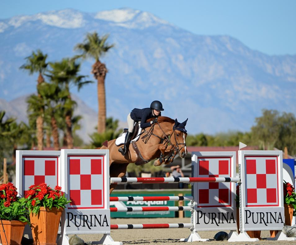 Show Jumping - Purina fence and mtn backdrop