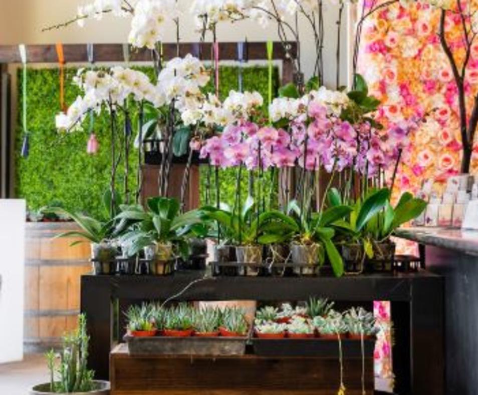 Flower Mart 3