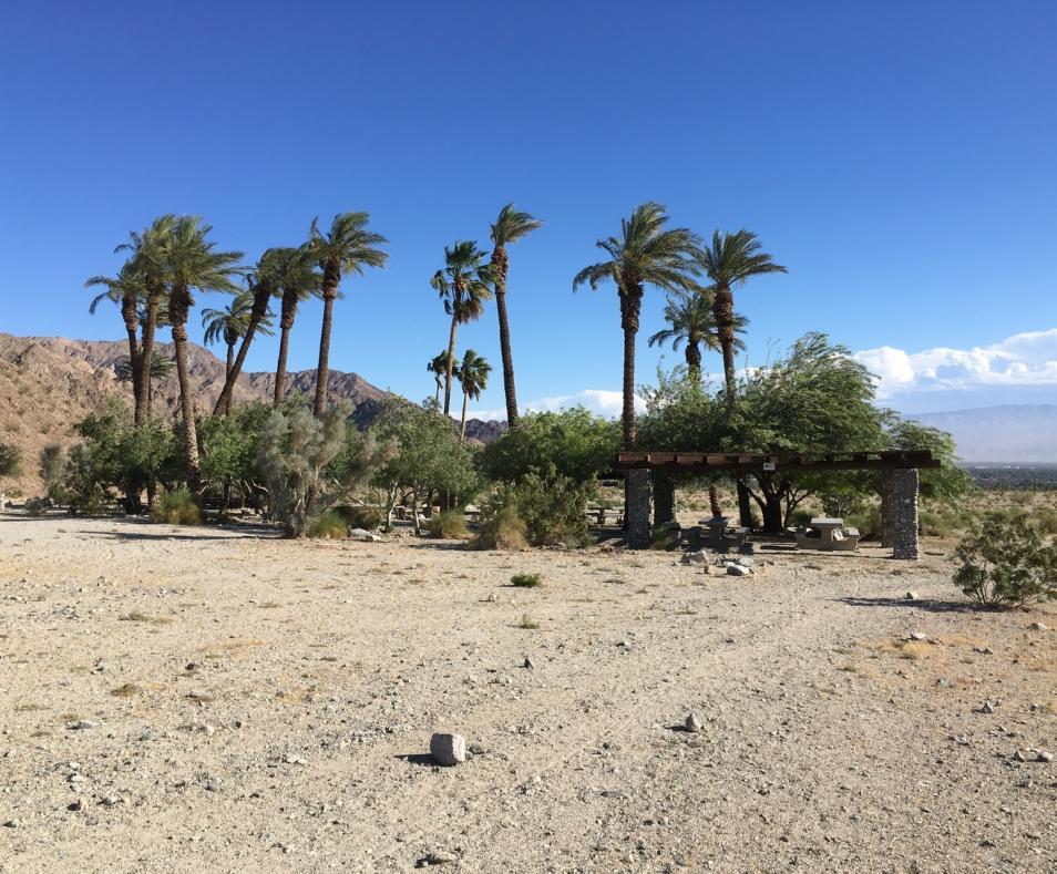 Cove Oasis