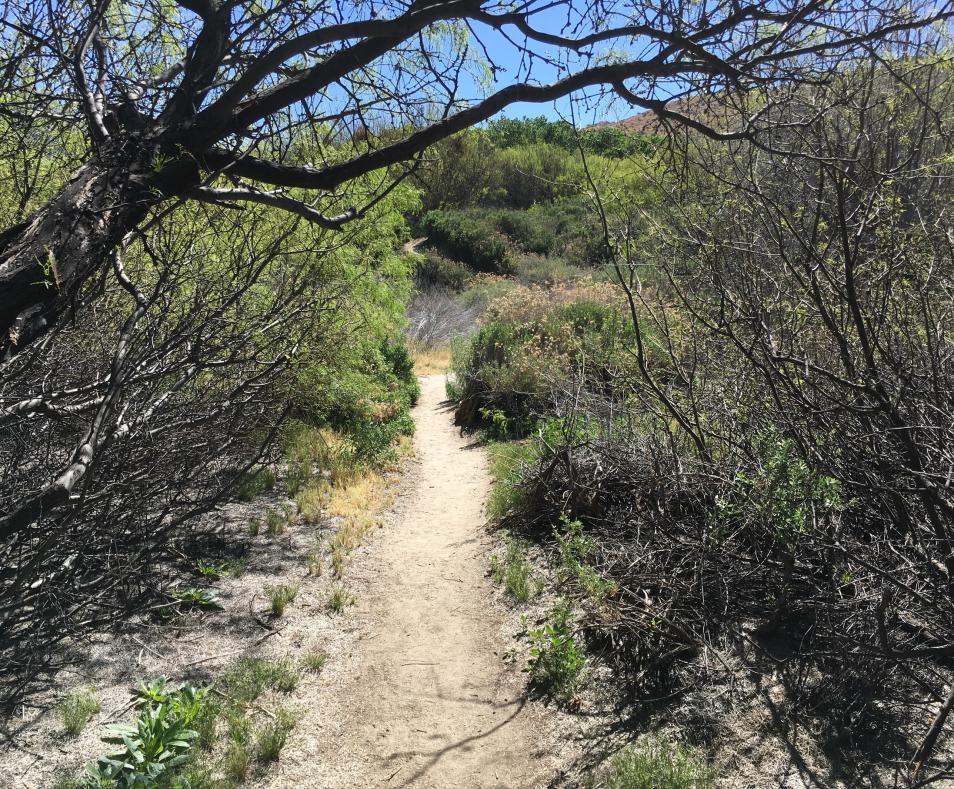 Desert Willow Trail