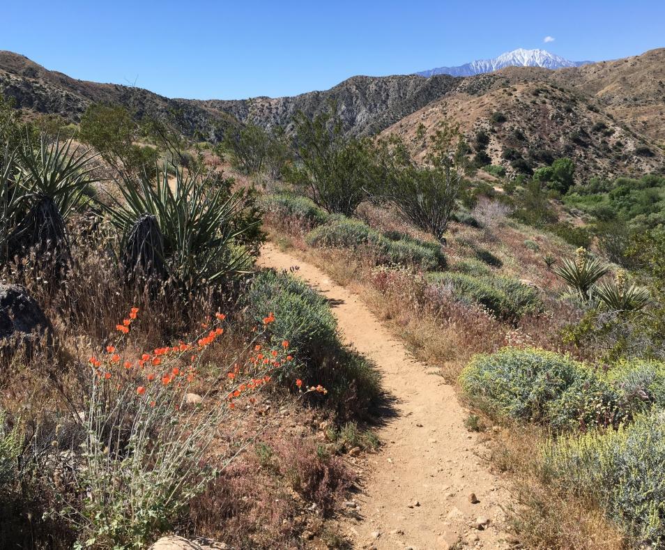 Yucca Ridge Loop