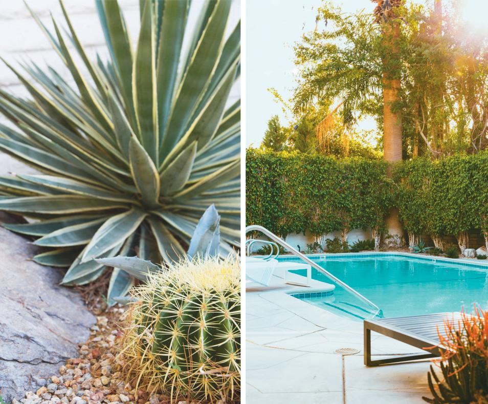 Beautiful desert landscaping and pool at The Amado