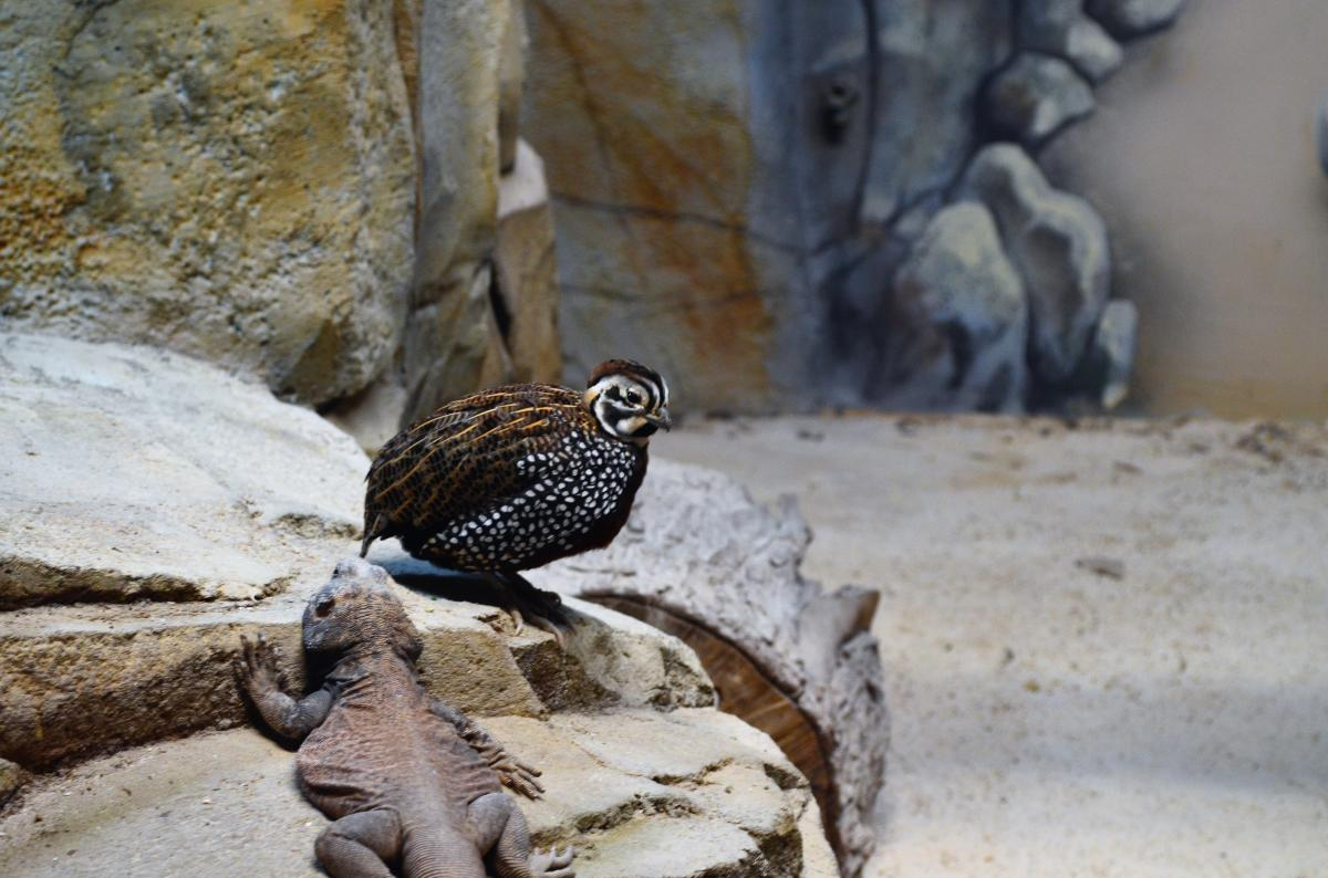 Elmwood Park Zoo Montezuma Quail and Lizard