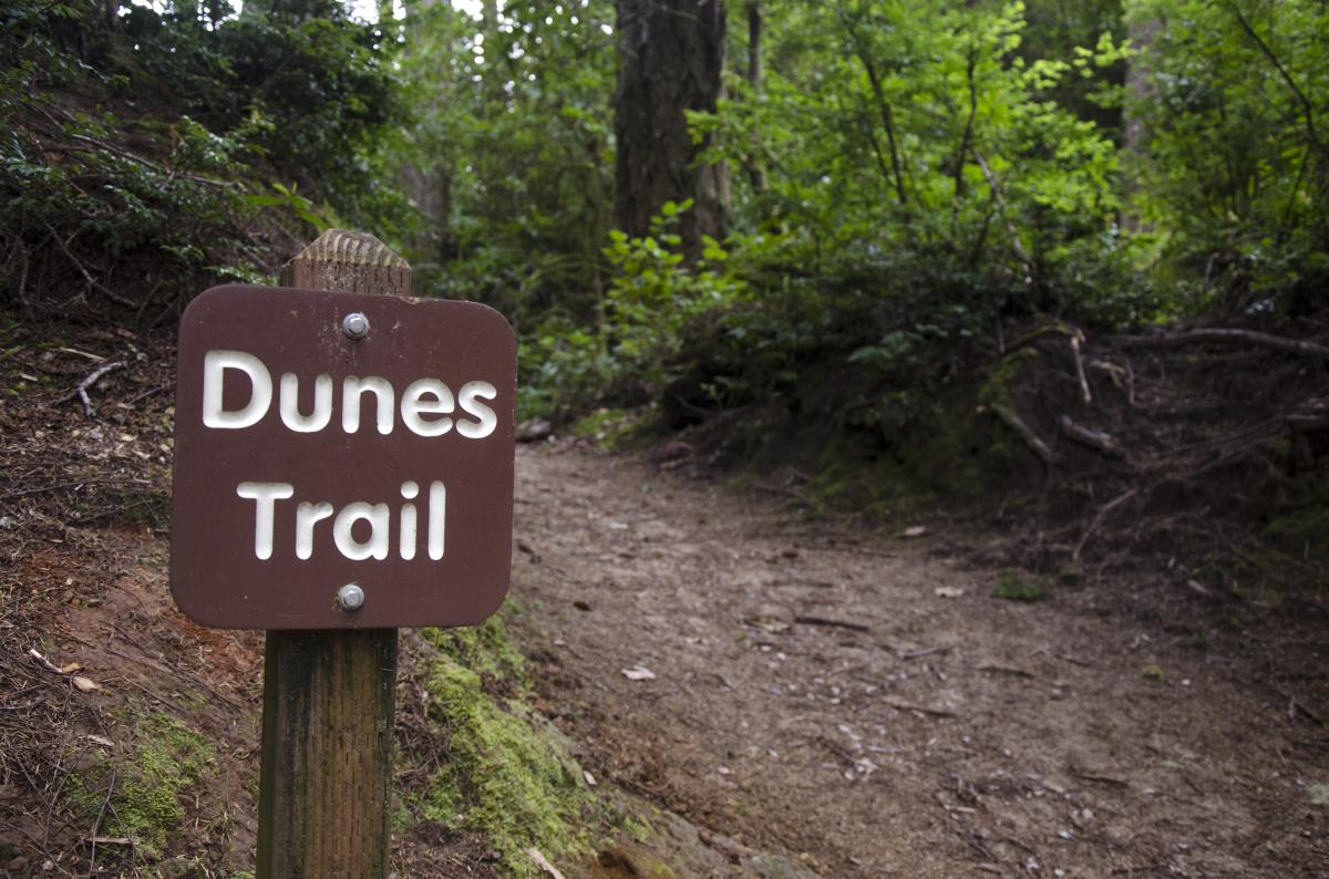 Dunes Trail by Katie McGuigan